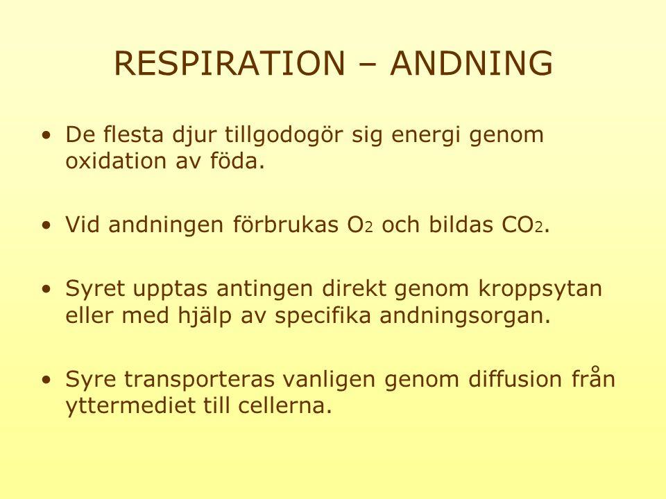 RESPIRATION – ANDNING De flesta djur tillgodogör sig energi genom oxidation av föda. Vid andningen förbrukas O2 och bildas CO2.