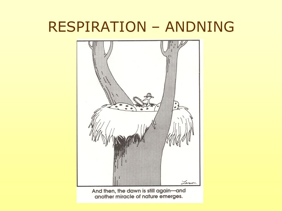 RESPIRATION – ANDNING