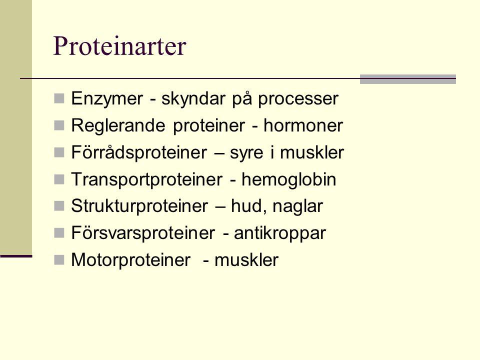 Proteinarter Enzymer - skyndar på processer