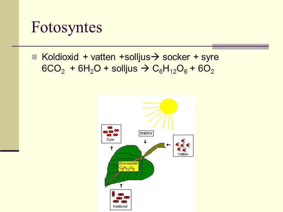 Fotosyntes Koldioxid + vatten +solljus socker + syre 6CO2 + 6H2O + solljus  C6H12O6 + 6O2.