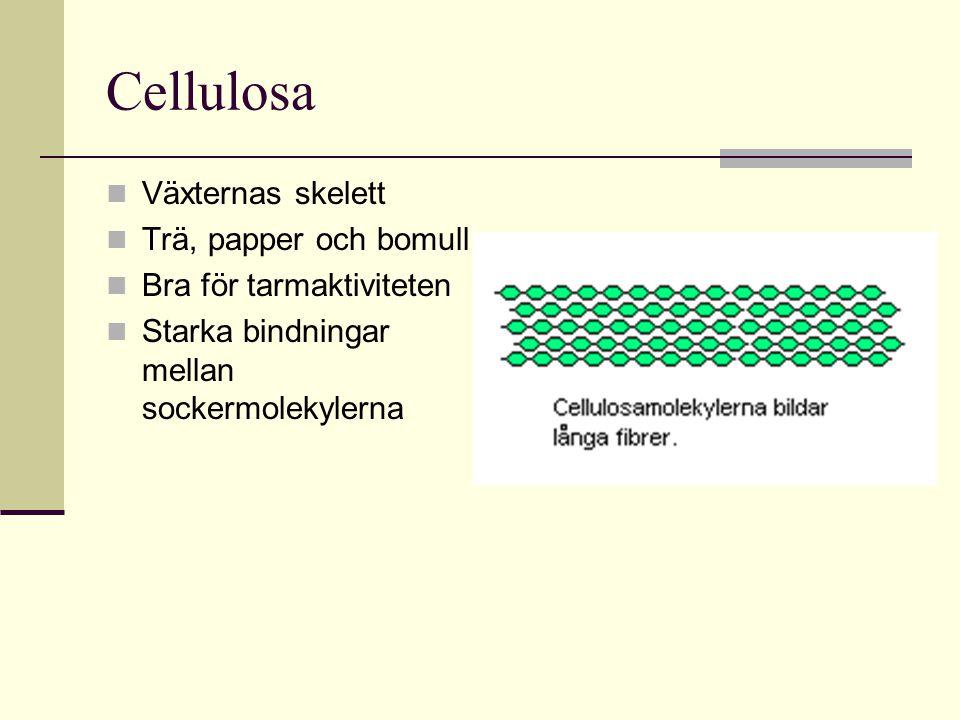 Cellulosa Växternas skelett Trä, papper och bomull