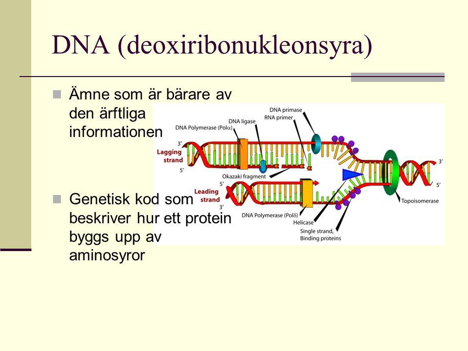 DNA (deoxiribonukleonsyra)