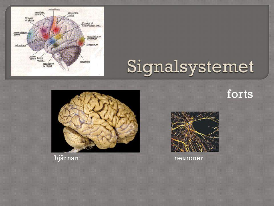 Signalsystemet forts hjärnan neuroner