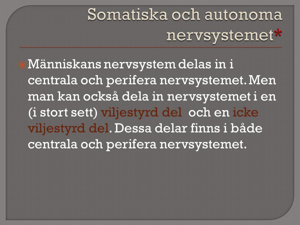 Somatiska och autonoma nervsystemet*