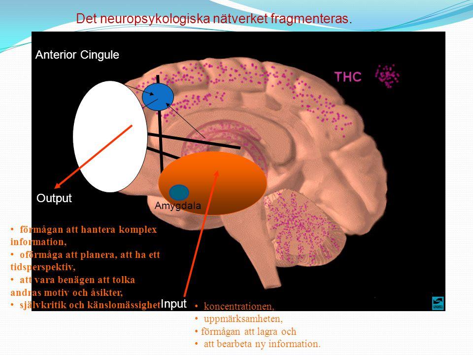 Det neuropsykologiska nätverket fragmenteras.