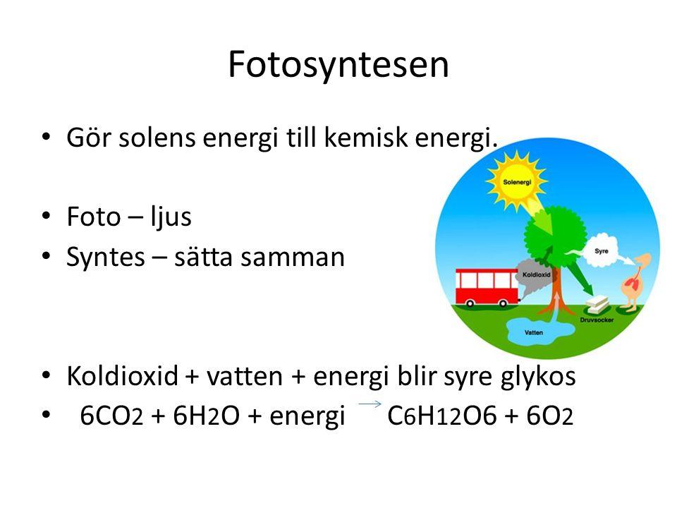 Fotosyntesen Gör solens energi till kemisk energi. Foto – ljus