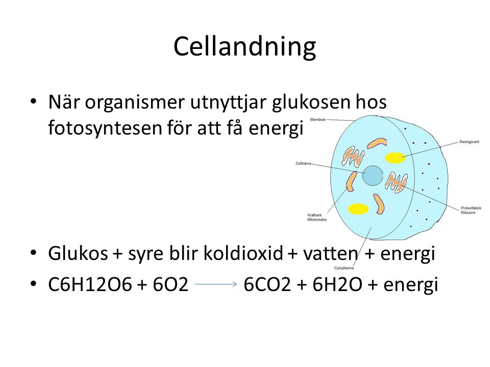 Cellandning När organismer utnyttjar glukosen hos fotosyntesen för att få energi. Glukos + syre blir koldioxid + vatten + energi.