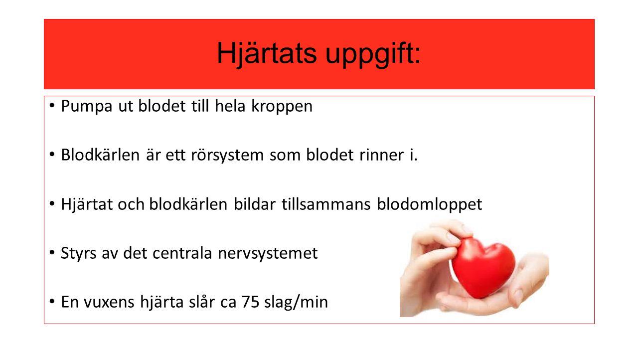 Hjärtats uppgift: Pumpa ut blodet till hela kroppen