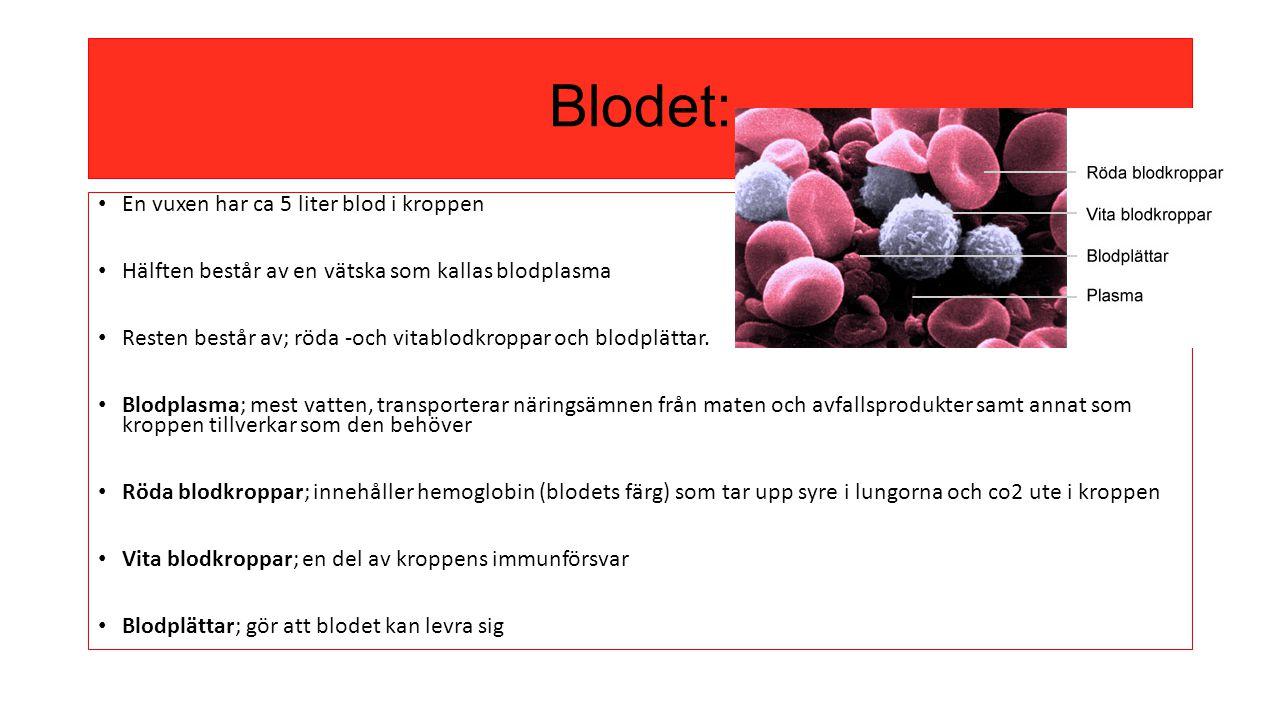 Blodet: En vuxen har ca 5 liter blod i kroppen