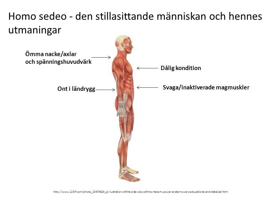 Homo sedeo - den stillasittande människan och hennes utmaningar