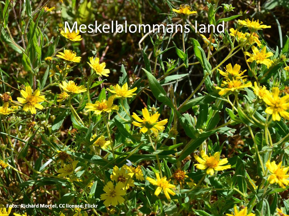 Meskelblommans land Foto: Richard Mortel, CC license, Flickr