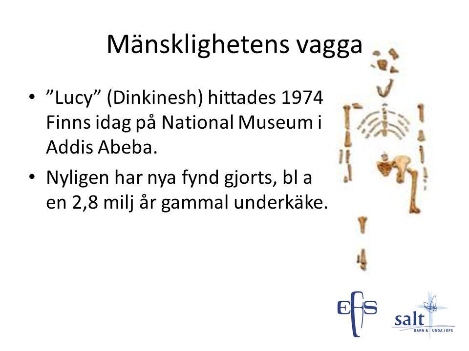 Mänsklighetens vagga Lucy (Dinkinesh) hittades 1974 Finns idag på National Museum i Addis Abeba.