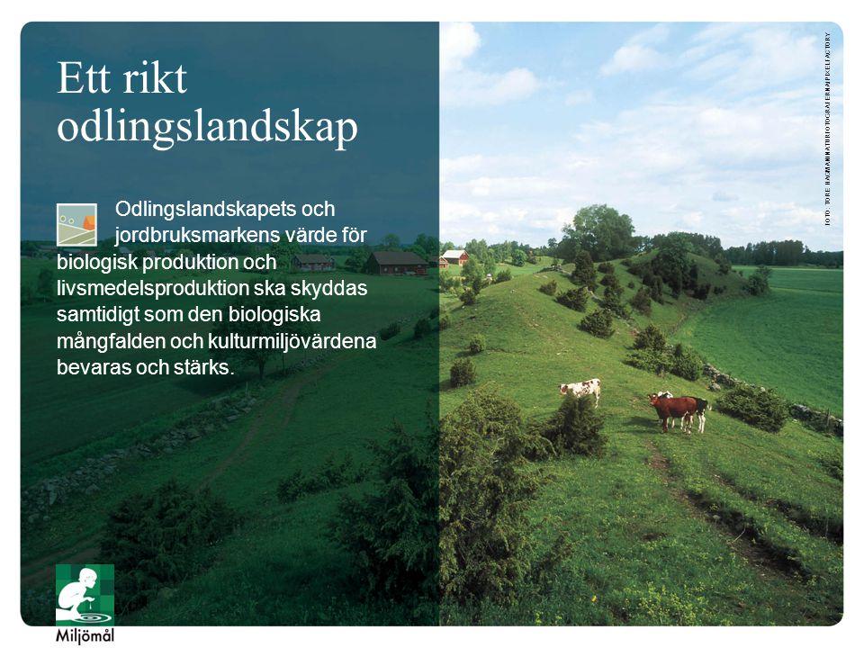 Ett rikt odlingslandskap