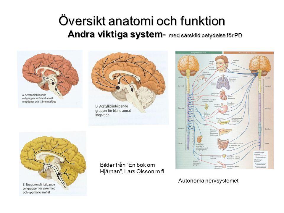 Översikt anatomi och funktion Andra viktiga system- med särskild betydelse för PD