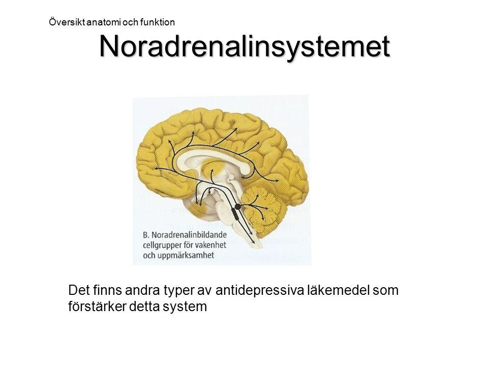 Noradrenalinsystemet