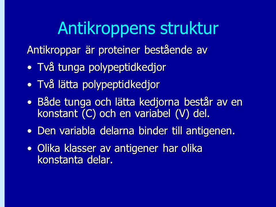 Antikroppens struktur