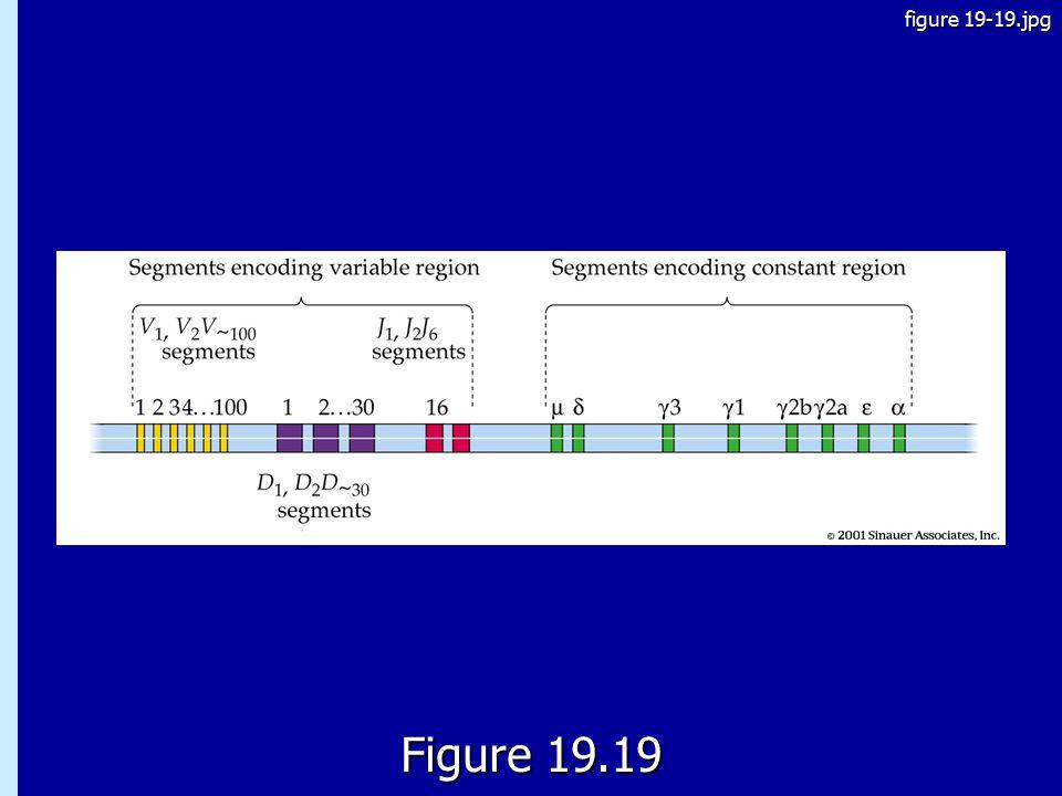 figure 19-19.jpg 19.19 Figure 19.19