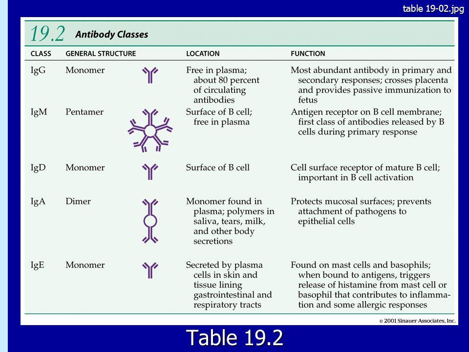 table 19-02.jpg 19.2 Table 19.2