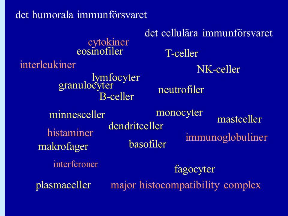 det humorala immunförsvaret