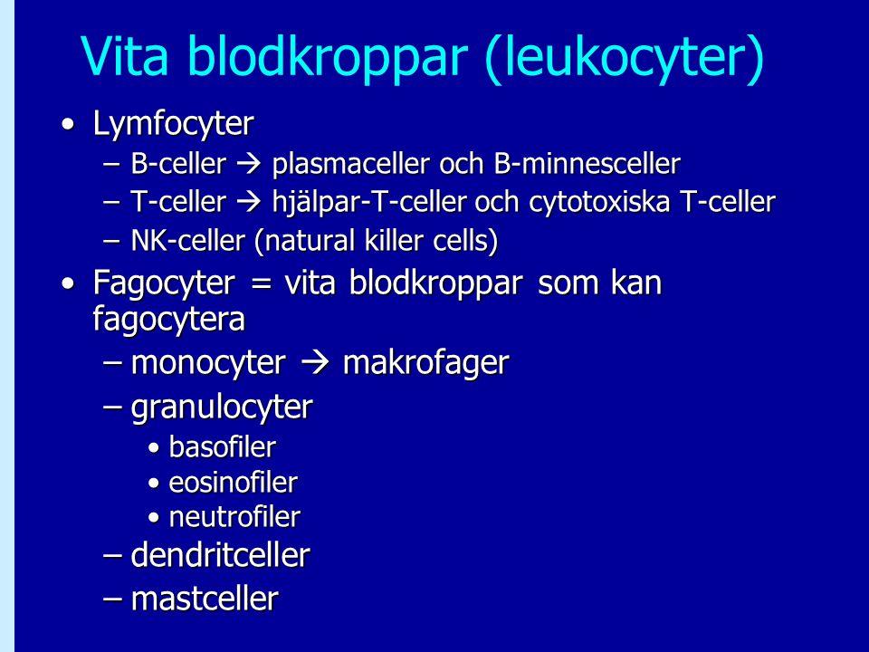 Vita blodkroppar (leukocyter)