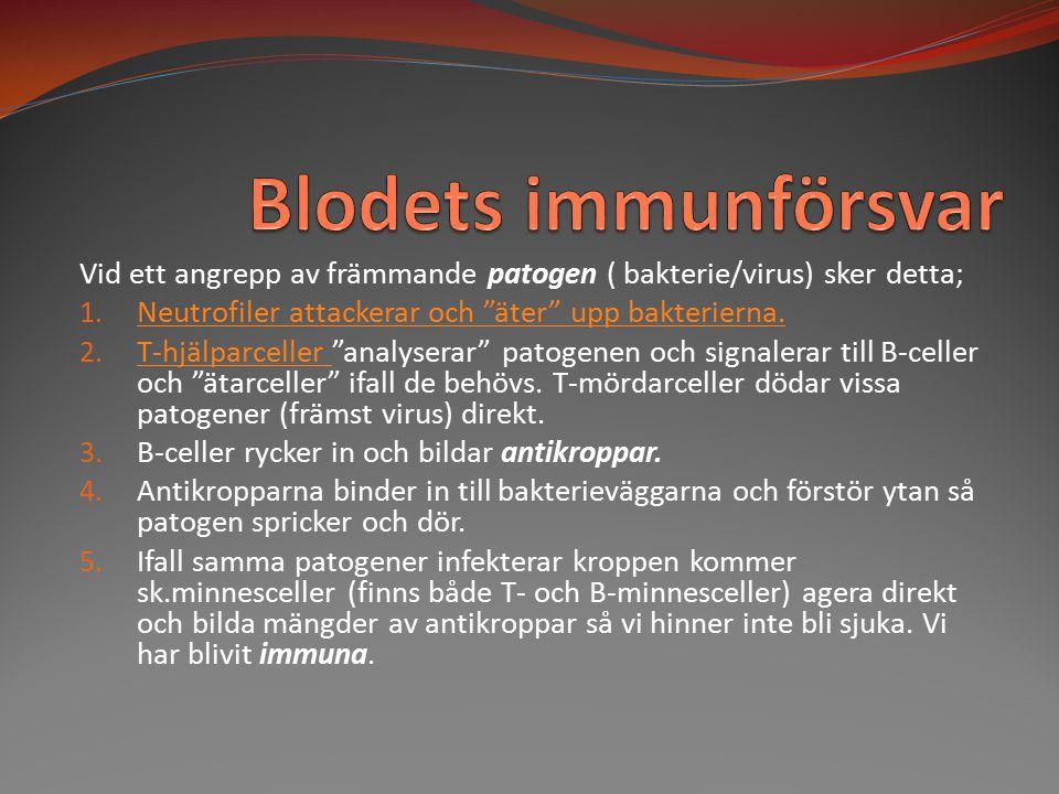 Blodets immunförsvar Vid ett angrepp av främmande patogen ( bakterie/virus) sker detta; Neutrofiler attackerar och äter upp bakterierna.