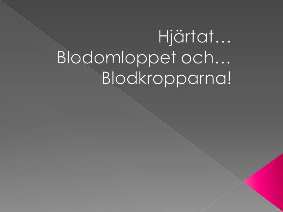 Hjärtat… Blodomloppet och… Blodkropparna!