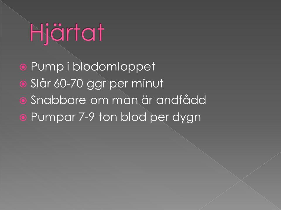 Hjärtat Pump i blodomloppet Slår 60-70 ggr per minut