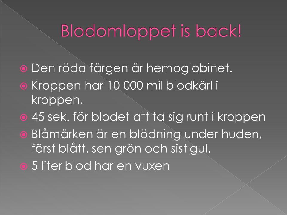 Blodomloppet is back! Den röda färgen är hemoglobinet.