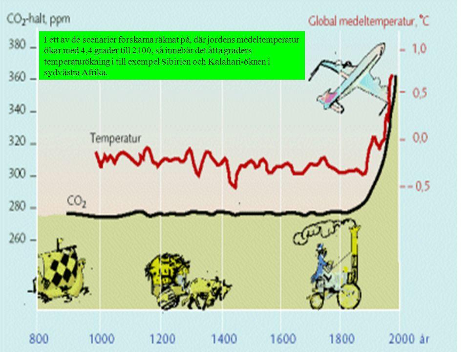 I ett av de scenarier forskarna räknat på, där jordens medeltemperatur ökar med 4,4 grader till 2100, så innebär det åtta graders temperaturökning i till exempel Sibirien och Kalahari-öknen i sydvästra Afrika.