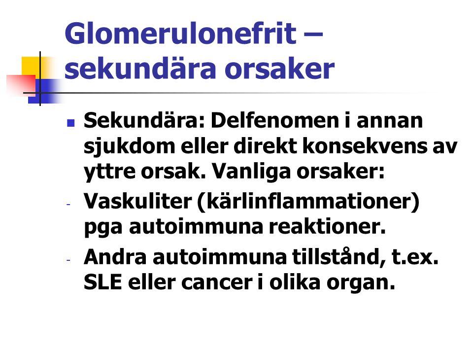 Glomerulonefrit – sekundära orsaker