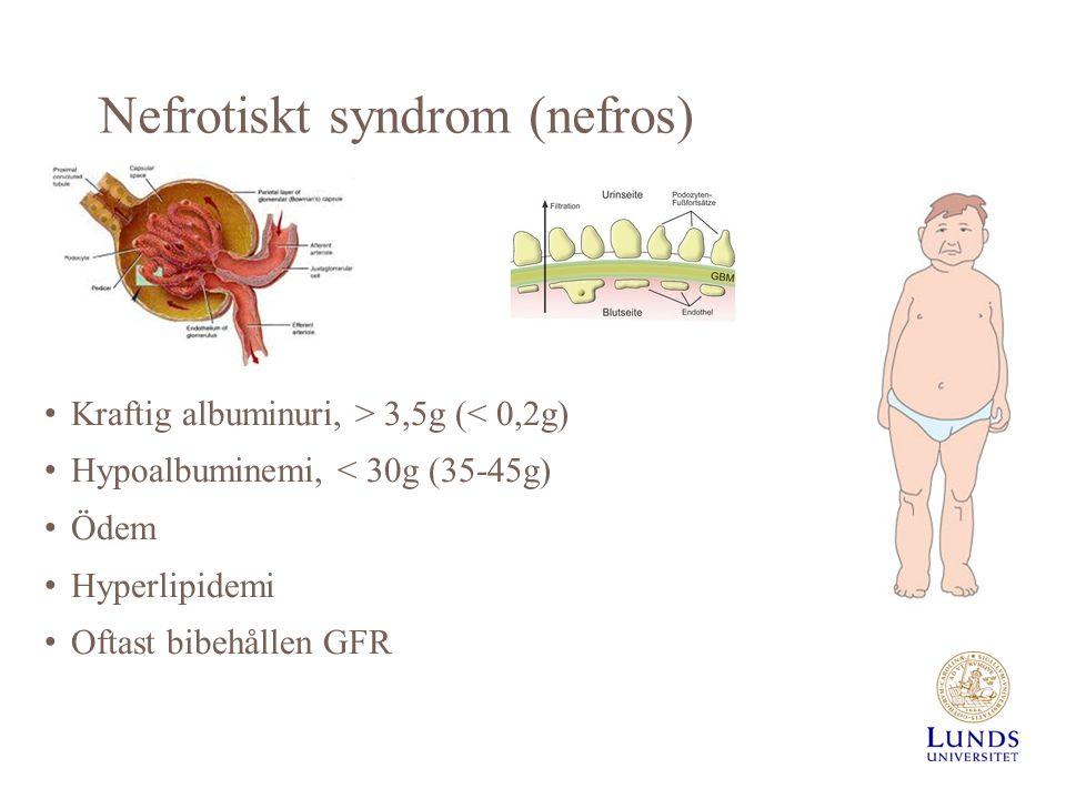 Nefrotiskt syndrom (nefros)