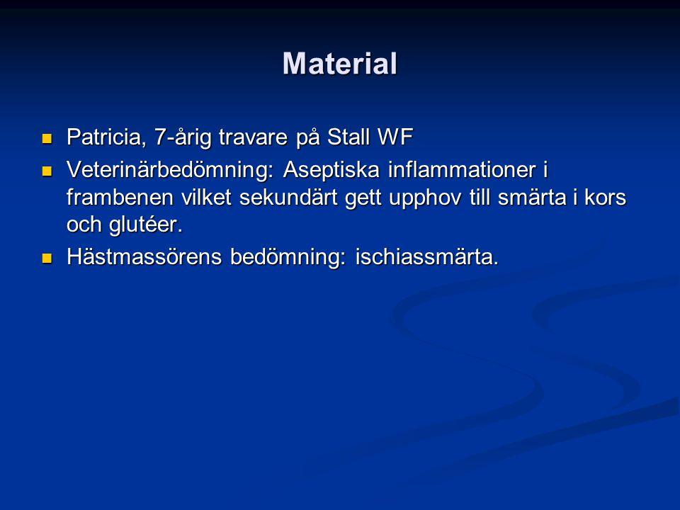 Material Patricia, 7-årig travare på Stall WF