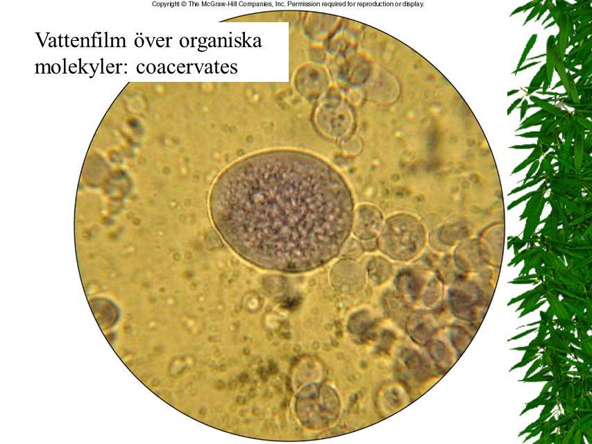 Vattenfilm över organiska molekyler: coacervates