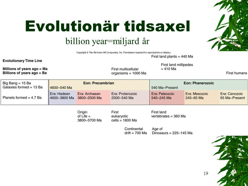 Evolutionär tidsaxel billion year=miljard år
