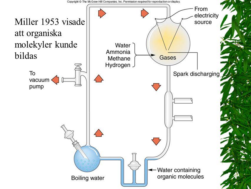 Miller 1953 visade att organiska molekyler kunde bildas