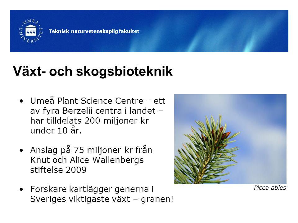 Växt- och skogsbioteknik