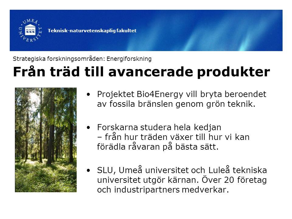 Från träd till avancerade produkter