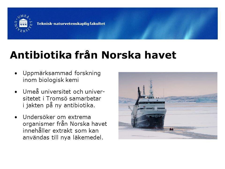 Antibiotika från Norska havet