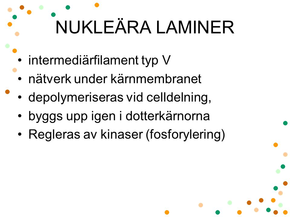 NUKLEÄRA LAMINER intermediärfilament typ V nätverk under kärnmembranet