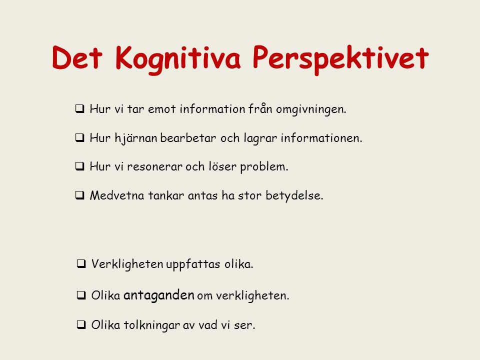 Det Kognitiva Perspektivet