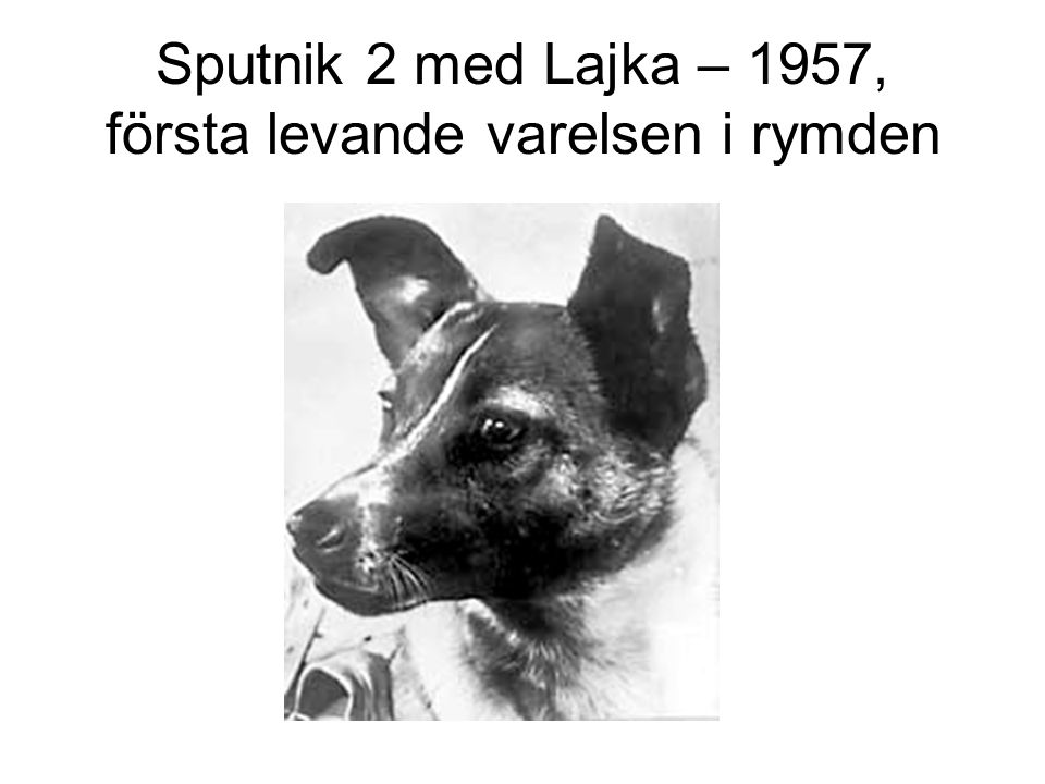 Sputnik 2 med Lajka – 1957, första levande varelsen i rymden