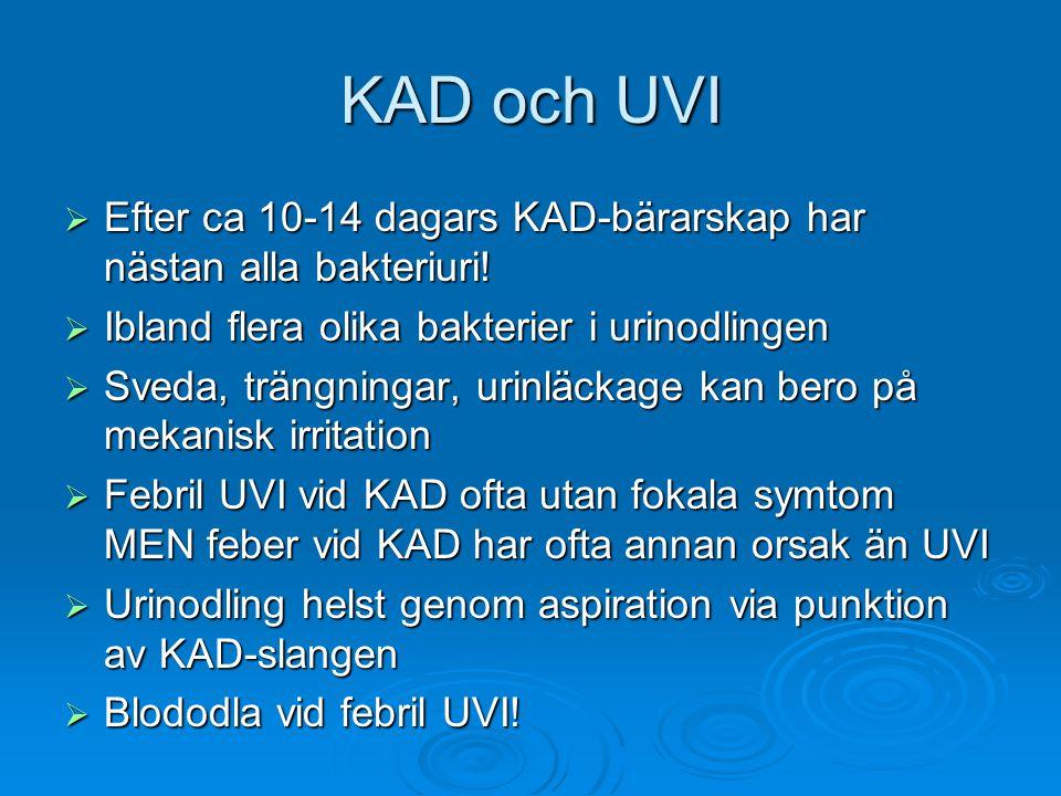 KAD och UVI Efter ca 10-14 dagars KAD-bärarskap har nästan alla bakteriuri! Ibland flera olika bakterier i urinodlingen.