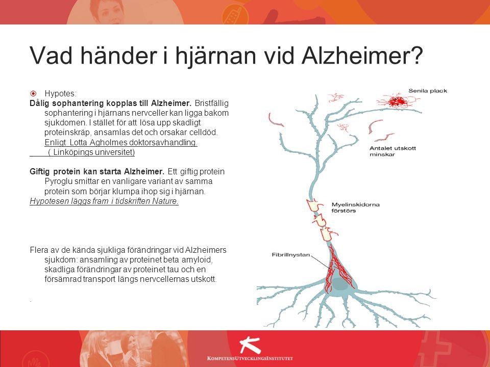 Vad händer i hjärnan vid Alzheimer