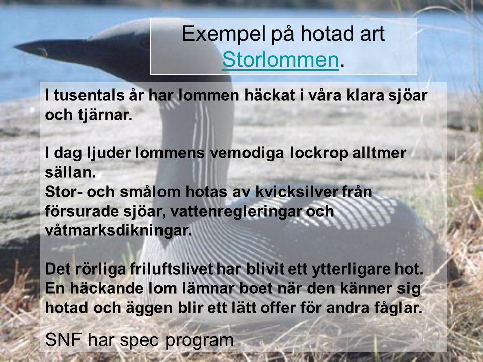 Exempel på hotad art Storlommen.