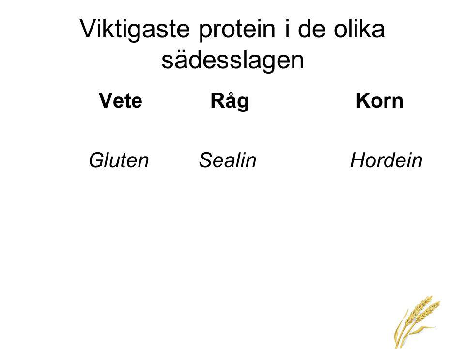 Viktigaste protein i de olika sädesslagen