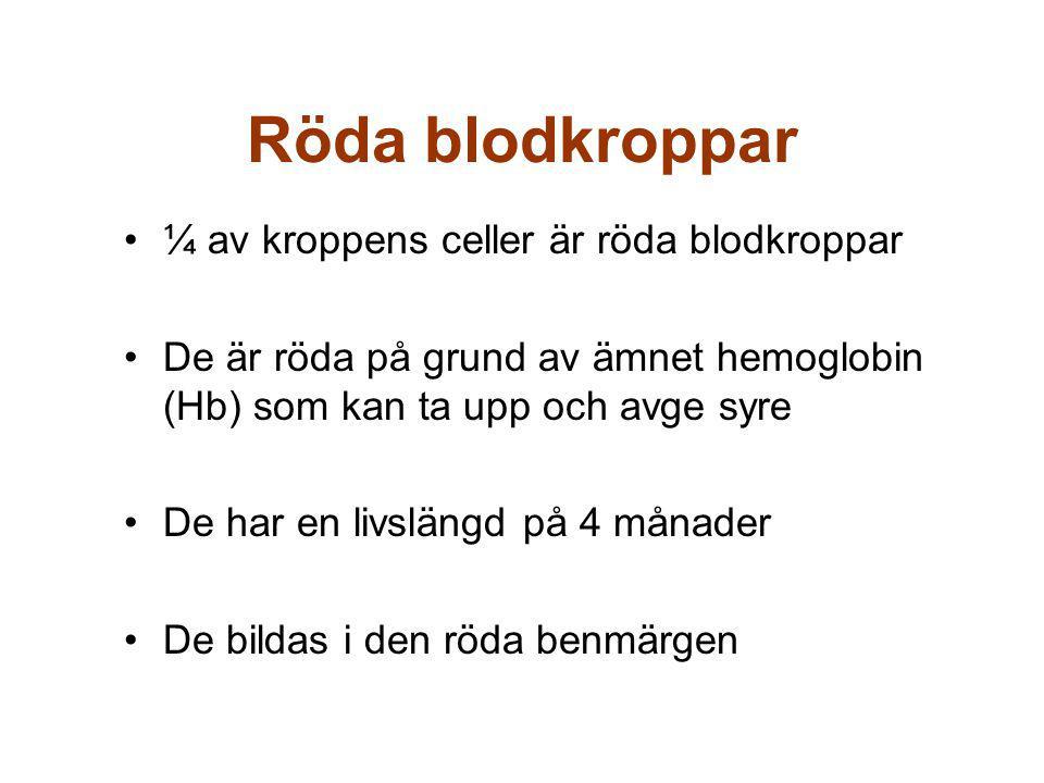 Röda blodkroppar ¼ av kroppens celler är röda blodkroppar