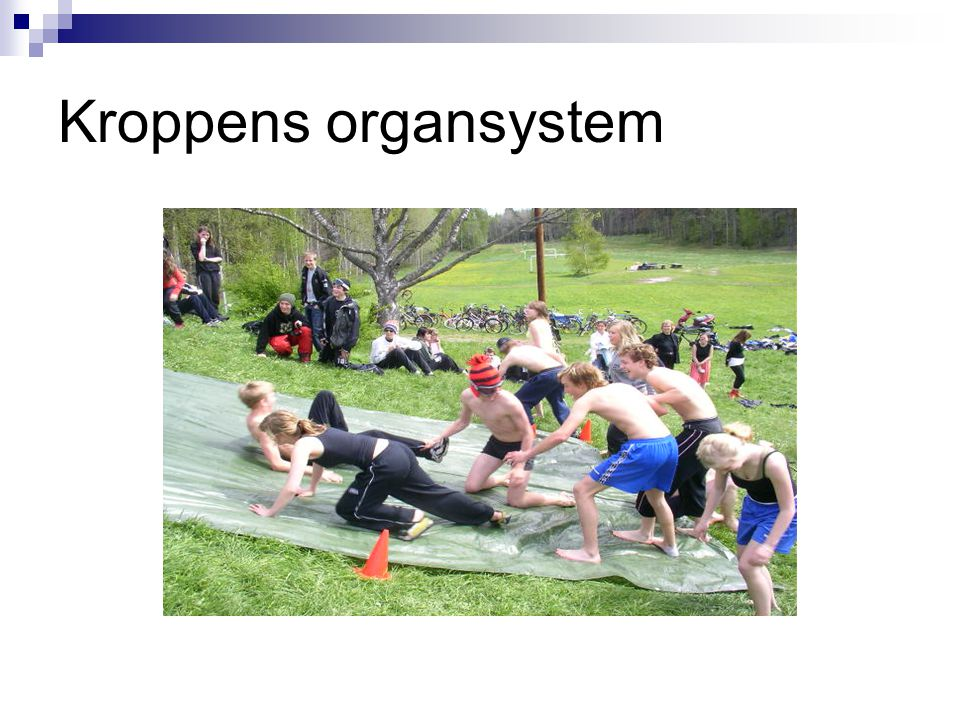 Kroppens organsystem