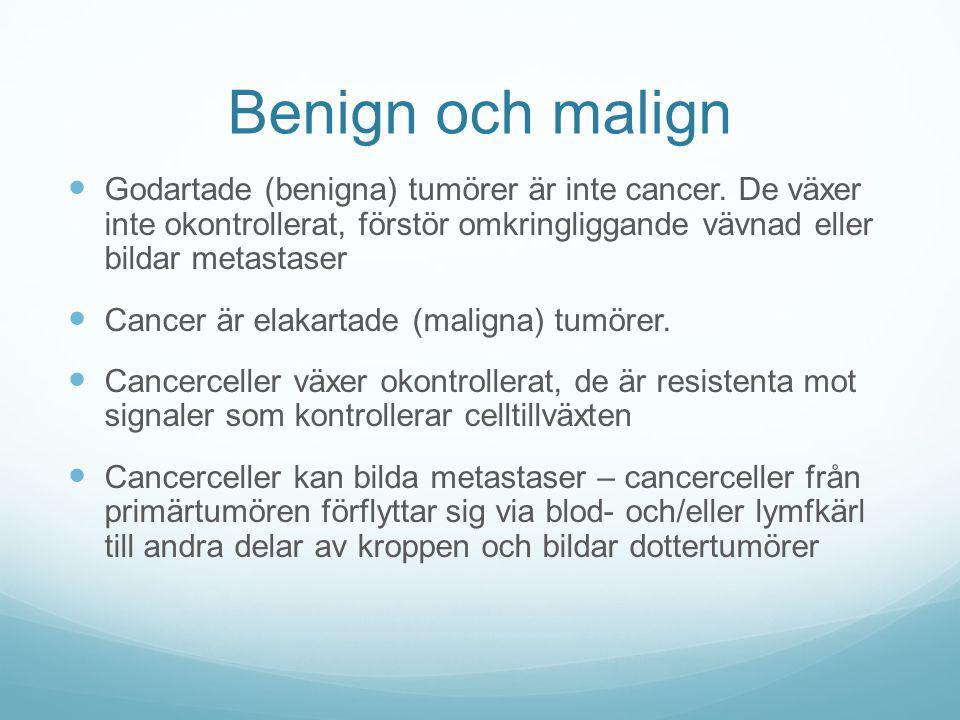 Benign och malign Godartade (benigna) tumörer är inte cancer. De växer inte okontrollerat, förstör omkringliggande vävnad eller bildar metastaser.