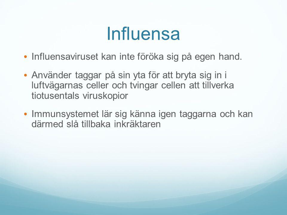 Influensa Influensaviruset kan inte föröka sig på egen hand.