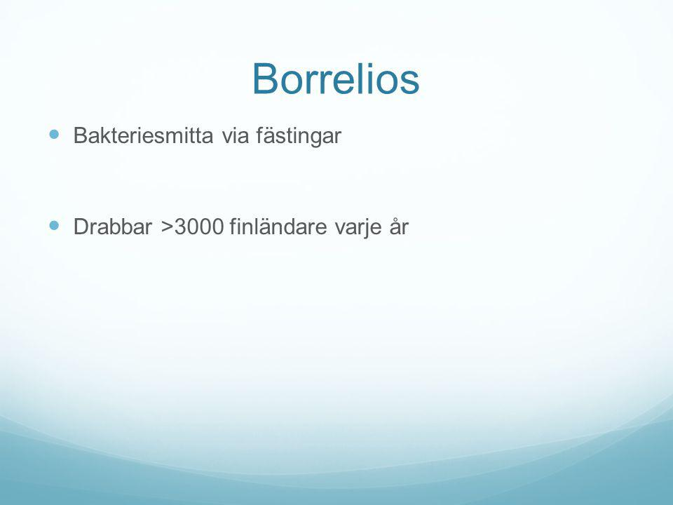 Borrelios Bakteriesmitta via fästingar